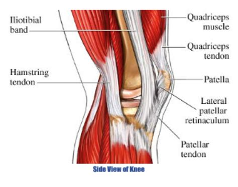 diagram of knee joint picture 9