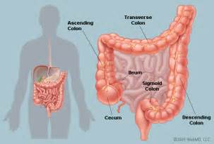 location of colon picture 1