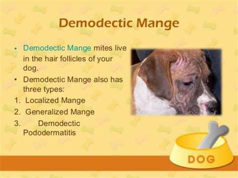 hypothyroidism in dogs and hair loss picture 9