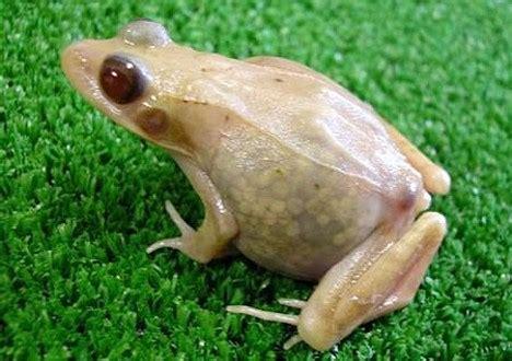 frog skin sungl es picture 18