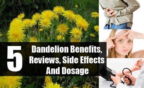 dandelion root effect on men picture 3