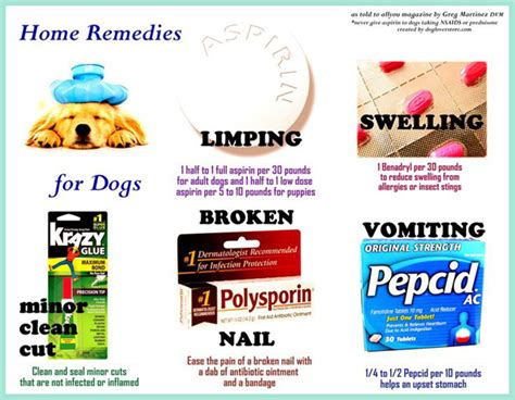 canine pain relief treatments picture 15