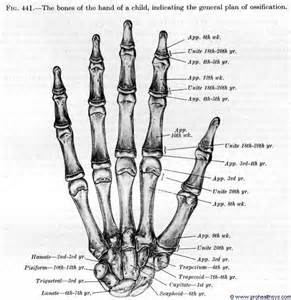 metacarpal phalangeal joint rom measurement picture 14