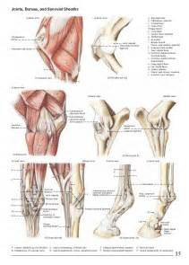 muscle bone and joint center picture 2