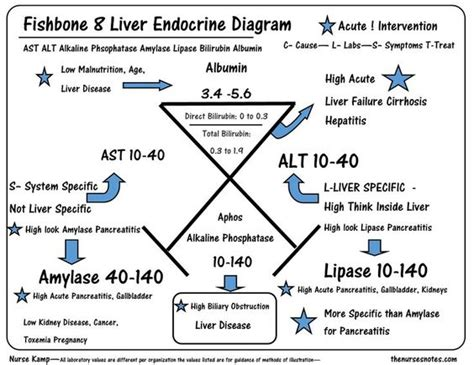 alt and liver function picture 14