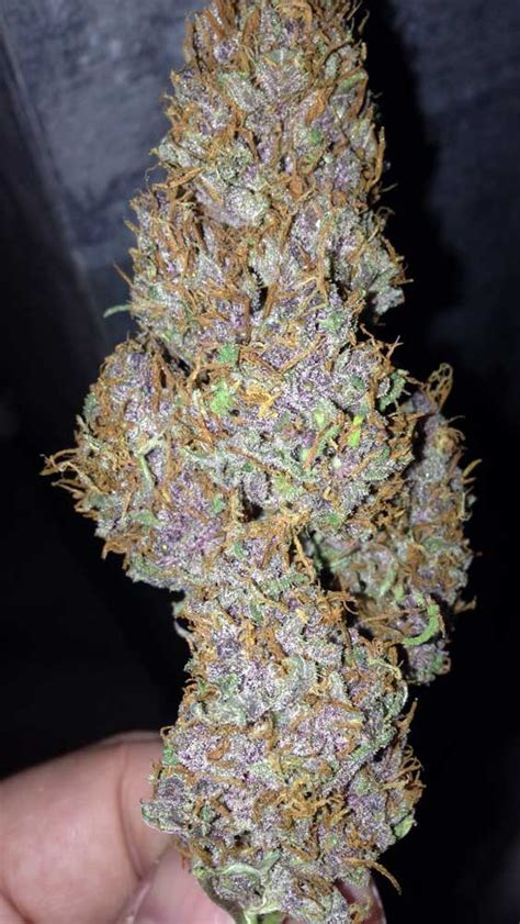 bud or buds or marijuana or pot super picture 6