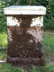 bee hives pictures picture 6