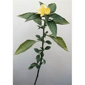 herbal plants price list pakistan picture 6