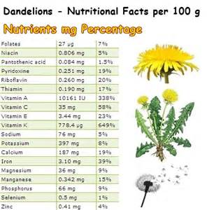 dandelion root & low testosterone levels picture 14