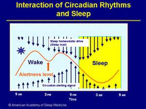 circadian rhythm sleep disorders picture 3