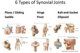 synovial joints picture 9