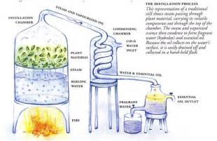 steam extractor for herbs picture 9