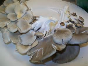 squid cholesterol picture 7