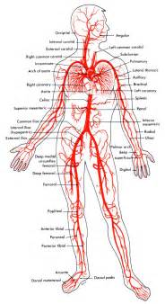 foods for male blood flow picture 6