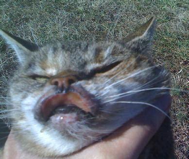 cat skin sores picture 2