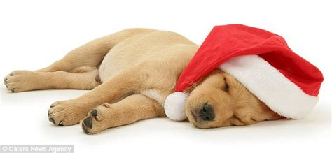 asleep at w christmas picture 13