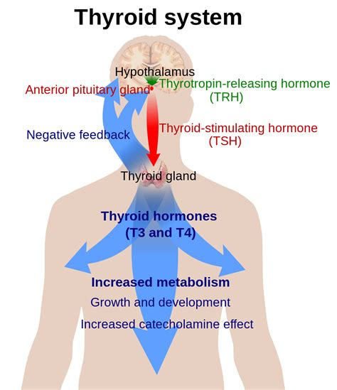 false normal thyroid reading picture 13