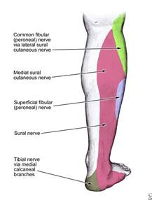 nerve aches picture 3