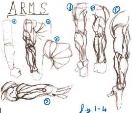 dynamic muscle picture 13
