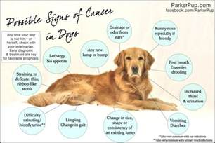 is gas a symptom  in dog with liver cancer picture 4