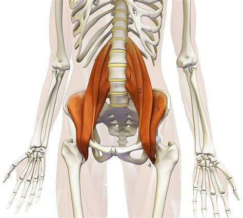 iliopsoas muscle picture 5