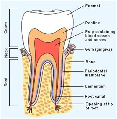 can teeth cause neck pain picture 14