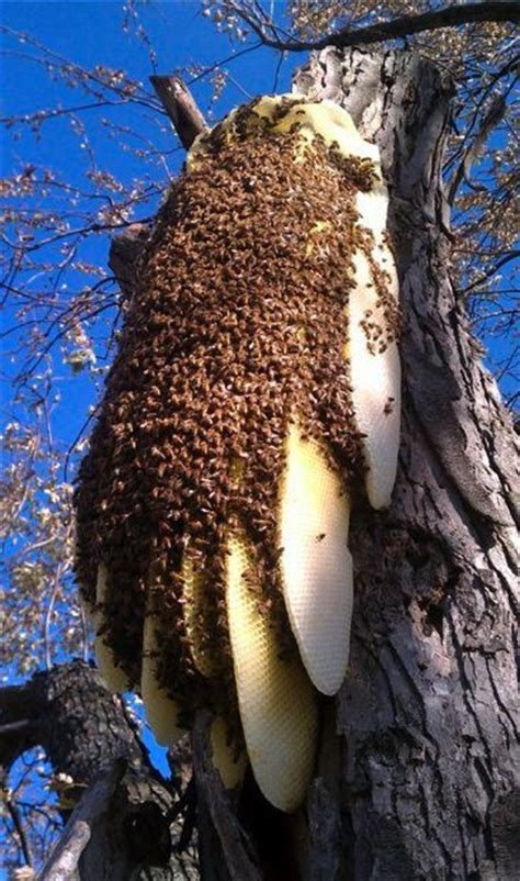 Natural Bee Hive picture 3