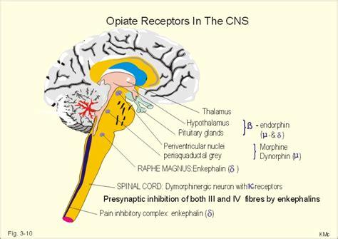 what supplement binds to opiate receptors picture 6