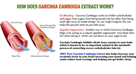 how long does garcinia cambogia stay in the picture 2