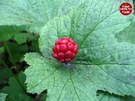 Herbal remedies for urinary tract infections picture 17