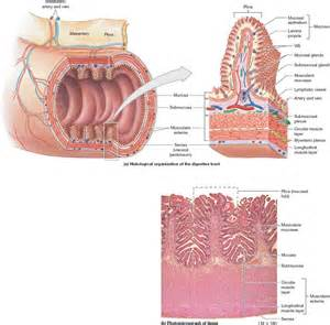 depigmented mucosa of the colon picture 1