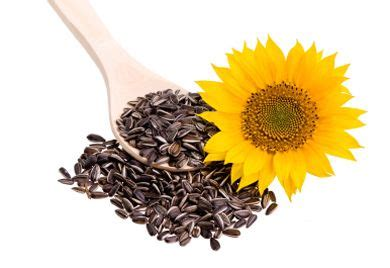Can eating sunflower seeds raise cholesterol picture 5