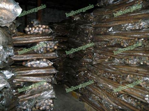 buy fresh burdock root online picture 10