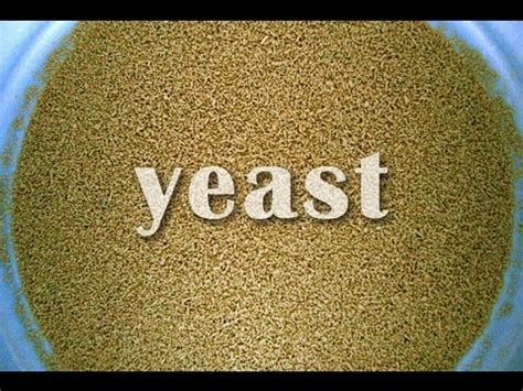 what is yeast picture 1