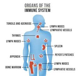 auto immune and gastrointestinal picture 14