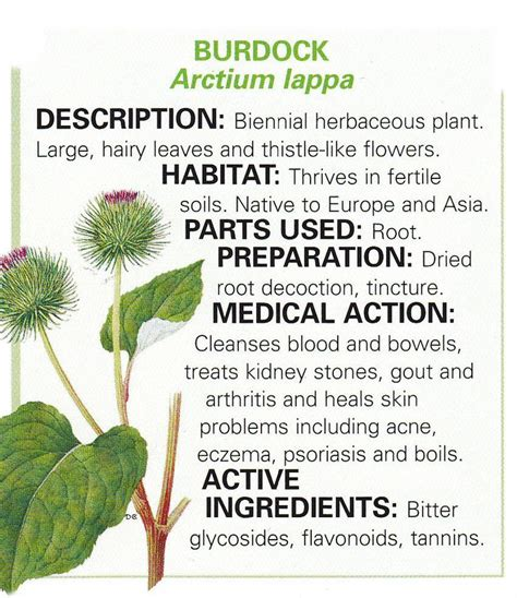 togatoy herbal roots benefits picture 3