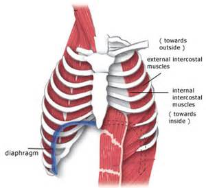 intercostal muscle pain picture 10