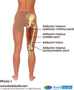 injury to the hip abductor muscle picture 7