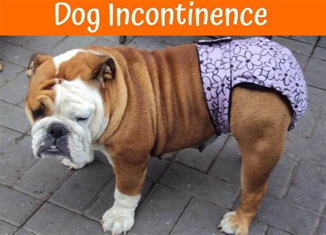 canine incontinence supplement picture 18