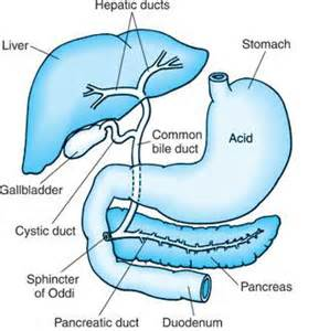 gall bladder pain picture 10