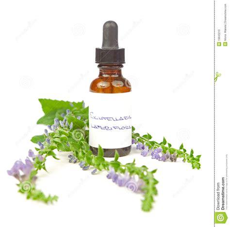 herbal cranium picture 19