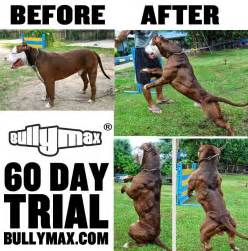 bully max before after picture 7