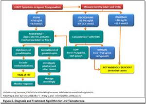 testosterone levels and osteoporosis picture 9