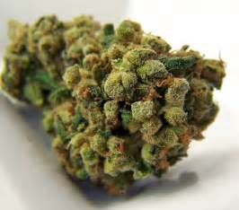 super strong weed strains thc 2014 picture 13