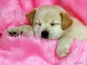 pitbulls in gloucester va put to sleep picture 5