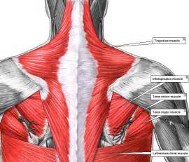 fatigue medicine muscle pain picture 11