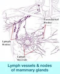 autoimmune axillary pain picture 21