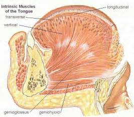 intrinsic and extrinsic muscle control picture 19