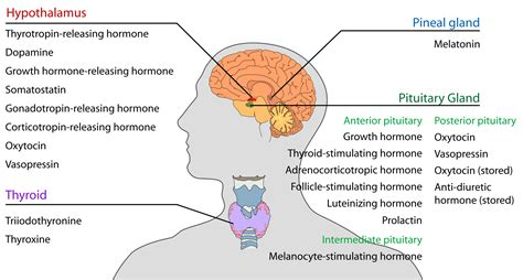 hgh cortisol levels picture 11