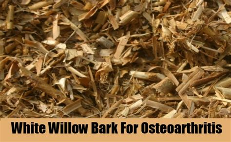 white willow bark for raches picture 3